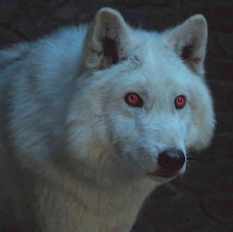 jon-snow-ghost-game-of-thrones-season-8-1555508073